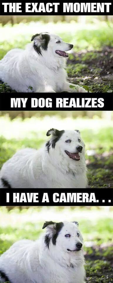 Presne ten moment, keď si môj pes všimne že ho fortím
