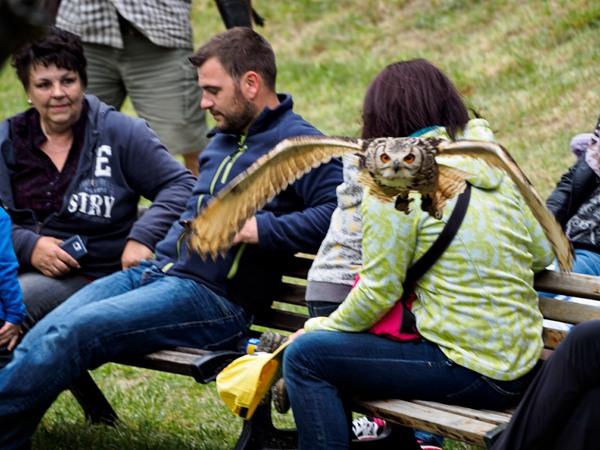Testovanie série záberov: sova